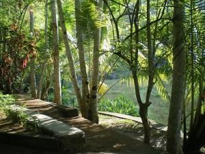 2014 スリランカ 緑沢山の庭